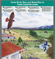 Invite Birds, Bats, Butterflies to Country Home Poster